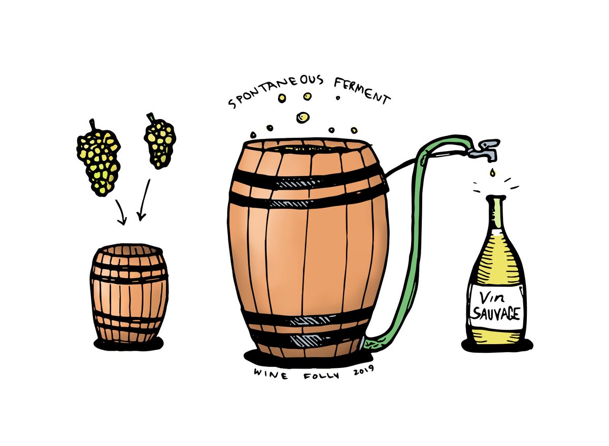 Wild Fermentation in Wine